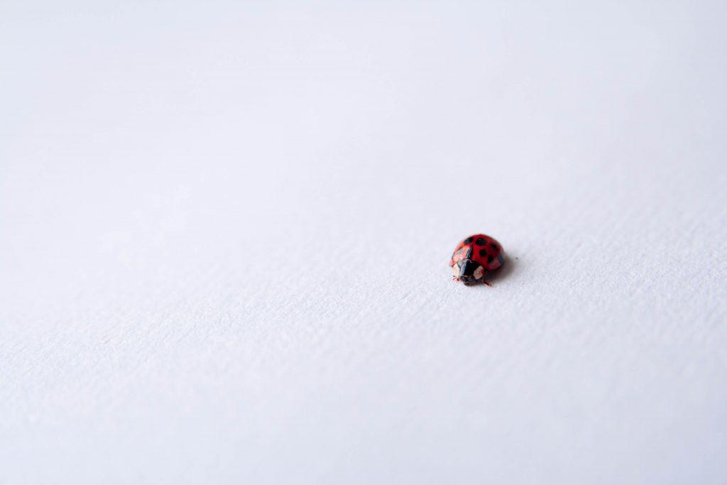 testing bug ladybug